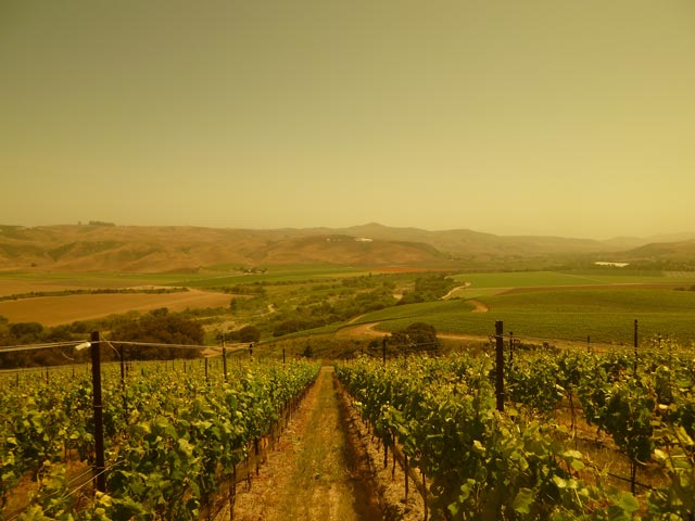 Bentrock Vineyard