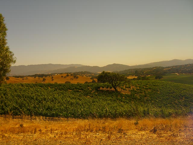 Stolpman Vineyard