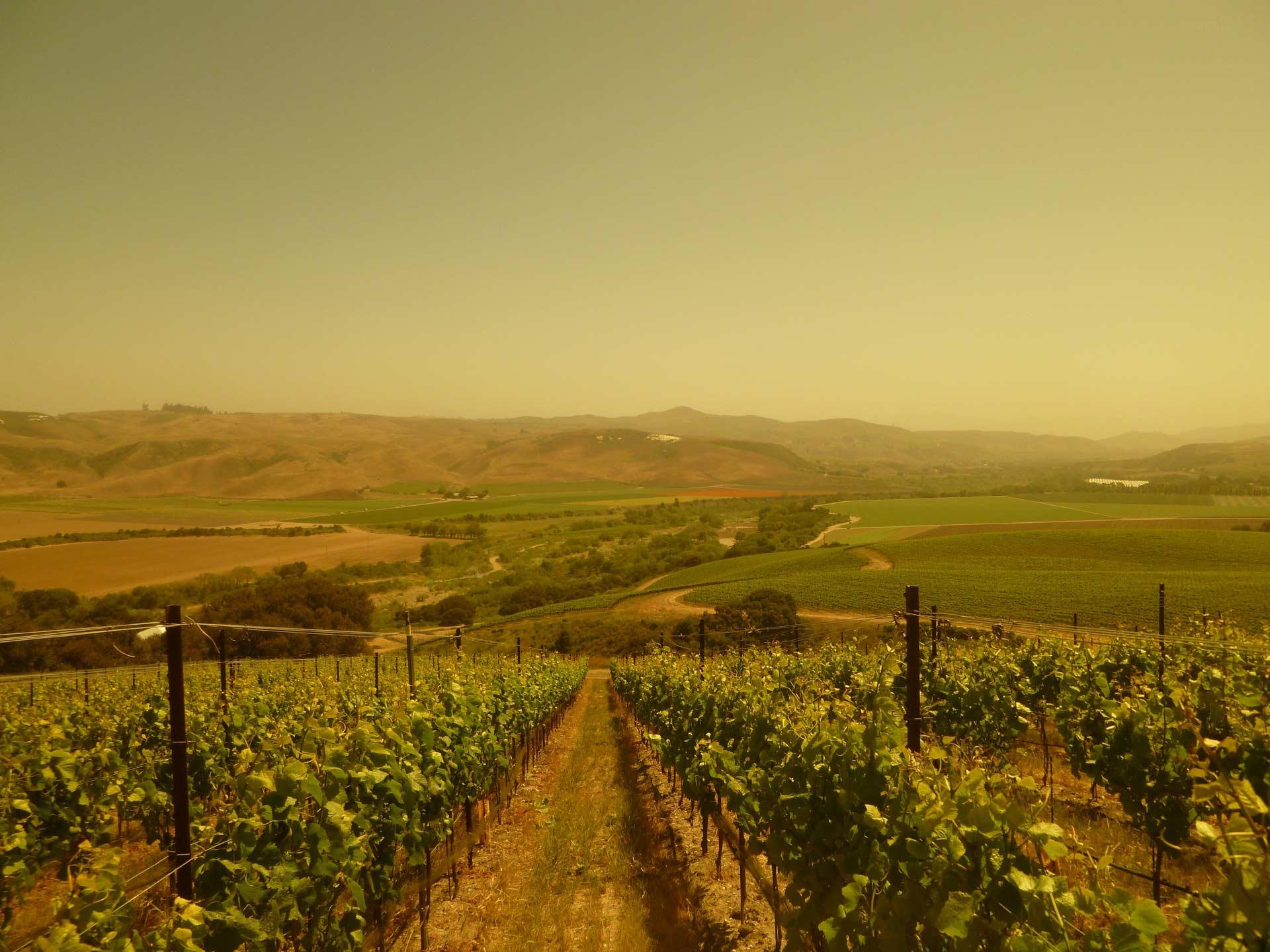 Bentrock Vineyard
