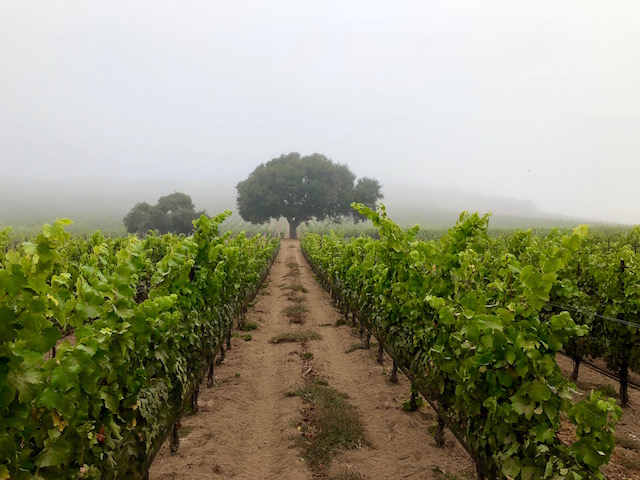 Duvarita Vineyard