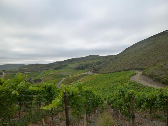 Radian Vineyard