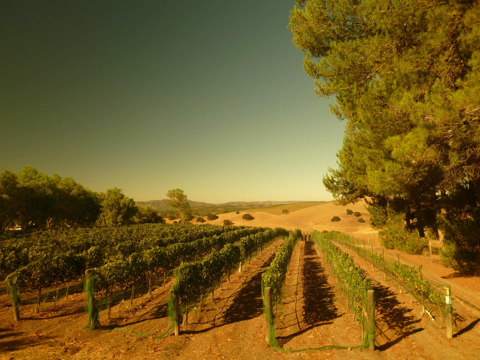 Harrison-Clarke Vineyard